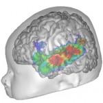 Le cerveau avant la lecture