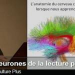 Les neurones de la lecture – vidéo