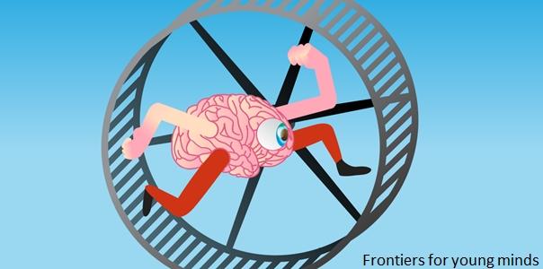 Le cerveau ne s'arrête jamais