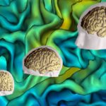 Le Laboratoire de Neuroimagerie du Développement